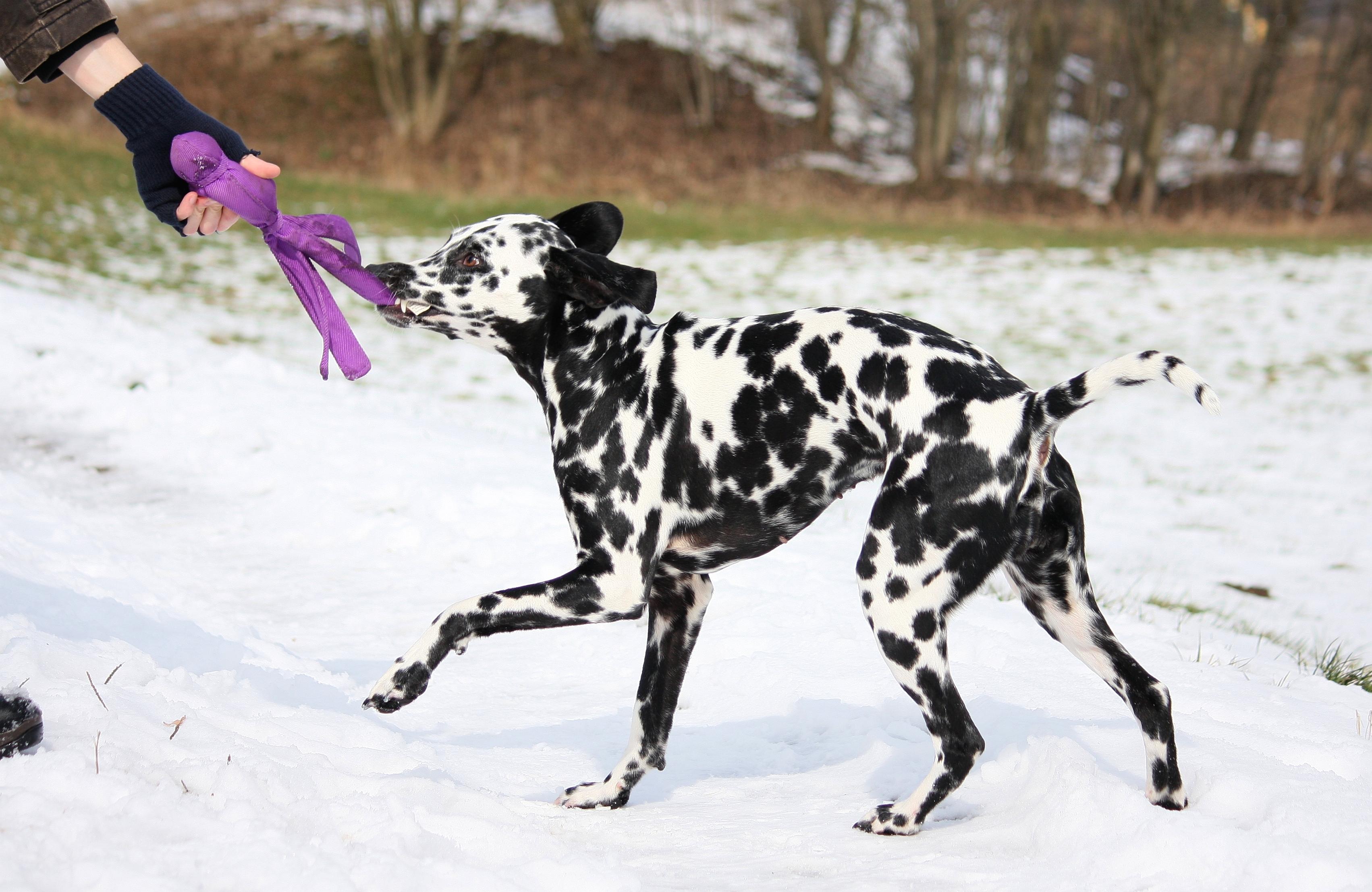 Hunde Sachen Kaufen : hundesachen einfach selber machen von alina kl glich hinrichs und sibylle str bele ~ Watch28wear.com Haus und Dekorationen